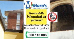 Read more about the article Stanco delle infestazioni da piccioni?